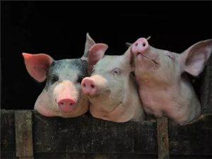猪场疾病防控中心