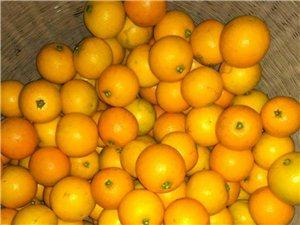 麻阳冰糖橙好吃不上火