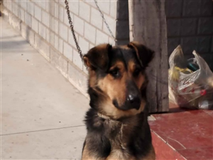 出售狗狗,因老人无力再养