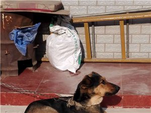 出售狗狗,因老人无力喂养