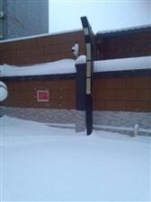 好美,2015的第一场雪。
