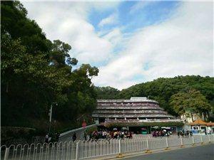 深圳本地游�:仙湖植物�@