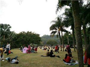深圳本地游记:仙湖植物园