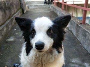浦城城关捡到一只狗狗