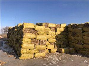 大量出售玉米秸秆饲草