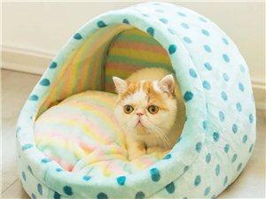 求购小奶猫一只