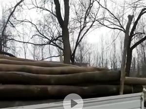 高价回收旧木头,杨木,榆木,榆木门,木头车轮,老家具,电话18233976470