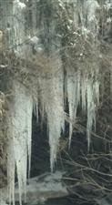 故乡白河麻虎松树石槽