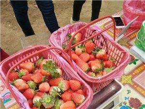 過年有需要草莓送禮的可以聯系預定了