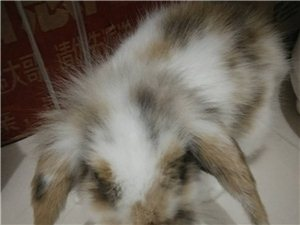 兔兔領養兔兔領養