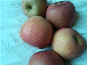 批发零售陕西苹果