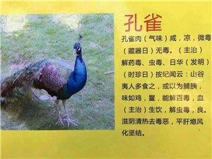 出售食用商品藍孔雀