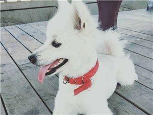 寻狗启示,本人狗狗叫汤圆