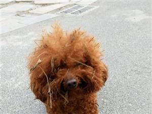 我家的狗2018年2月17日下午在�R金天童山有失