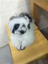 我家爱犬于上午9:30左右在南溪文化小区走失...看到的朋友联系13302829515.必有重谢!