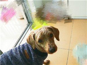 我家狗狗樂樂丟失了!