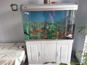 日生水族箱,水族箱长1米,宽40厘米,高140米。