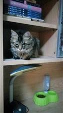寻猫启示…