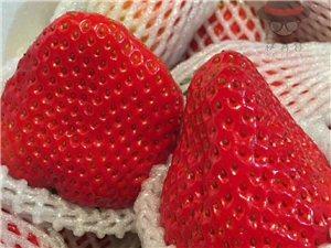 丹东东港草莓,真空包装,省表里包邮