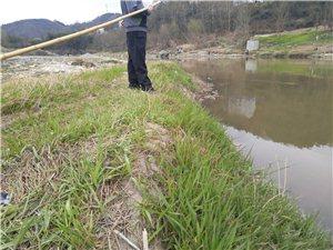 工厂元宵佳节偷排污水,污染月河