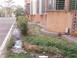 豪华路公安局集资房管道堵塞无人管,你好,我发这个图片是污水泄露,蚊虫满天,文明卫生城市何在?怎么办,