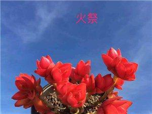 中国红--火祭
