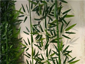 專業訂做高中低檔仿真竹子樹