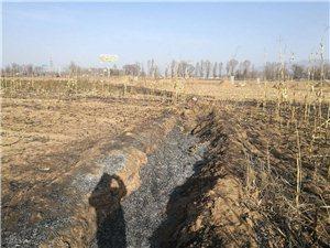 我在村里种的树被火烧了,报了警但至今找不到肇事者,该怎么办?