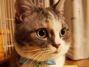 想领养一只猫,个人比较喜欢小动物。