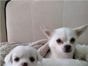 幼犬免费送养