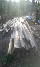 修房剩的废旧树木,可以打桩,打架子,撑树干,劈柴都可以,有需要的好心老板请联系,价格面议!电话137...