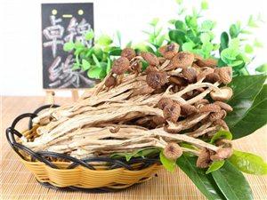 广昌老家种茶树菇卖