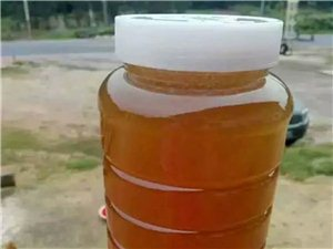 土蜜蜂糖出售