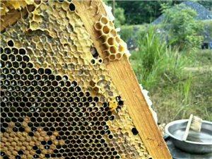 出售純蜂蜜,假一賠十