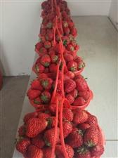 特大��惠,采摘草莓降至18元/斤