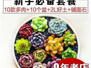 ��惠推�](多肉盆栽10�w)