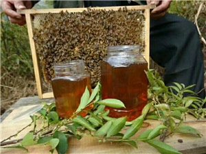 蜂舞自然,蜜润人间