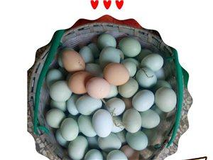 小耳朵家放养土鸡蛋免费领取品尝!
