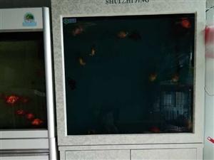 @两台全新鱼缸特价出售;每台900。送货上门。安装备齐。送数条金鱼。鱼食。材料。用具。地址;固镇县城...