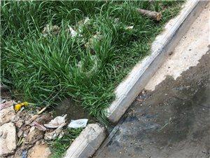 沈苑安置区下水道堵塞