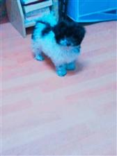 求购踏板车一辆。求购宠物?? ,价格面议微信,xp464618592