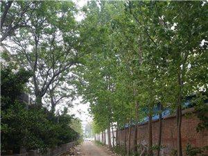 威尼斯人县中等职业学校(三职高)学生往墙外丢垃圾