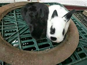 �H兔熊�兔好�B活
