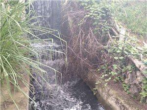 龙翔国际观澜苑东侧谁偷排污水?