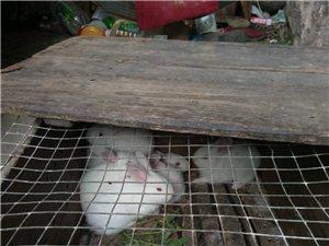 可爱*^o^*小兔子乖乖,有需要的??
