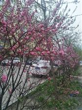 花开的真美。