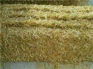求购小麦秸秆