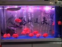 阜新市五洲小区出售新的水族箱(下过滤)有壁纸图,长1米5宽400,电子触屏显示器,全面超白玻璃,LE...
