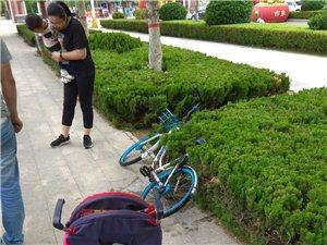 共享单车遭破坏!素质在哪?滨州人的耻辱!