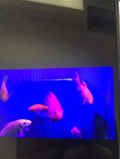 买的鹦鹉鱼和清道夫还有其他小金鱼,合计快300了。现在100元送人。需要的来拉上吧。我们在颐康园6号...